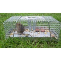Live Mouse Trap Top Catch - Small