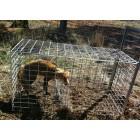 Fox Cage Trap