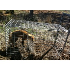Fox Cage Trap Australian Made